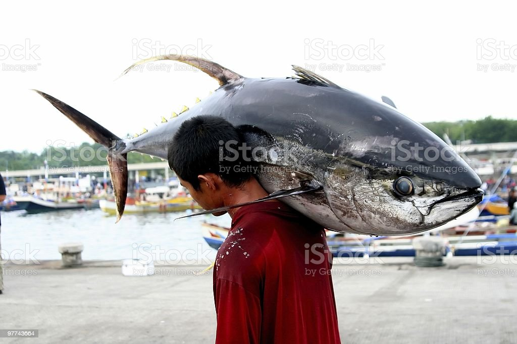 Unloading The Catch royalty-free stock photo