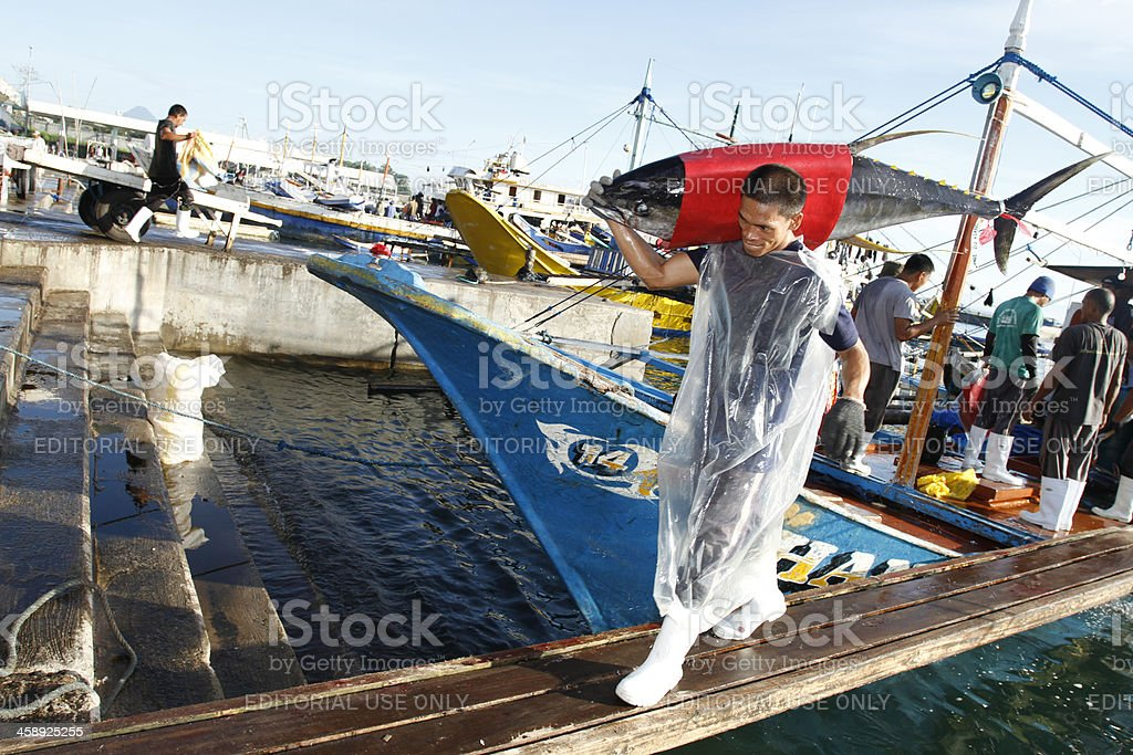 Unloading Tuna stock photo