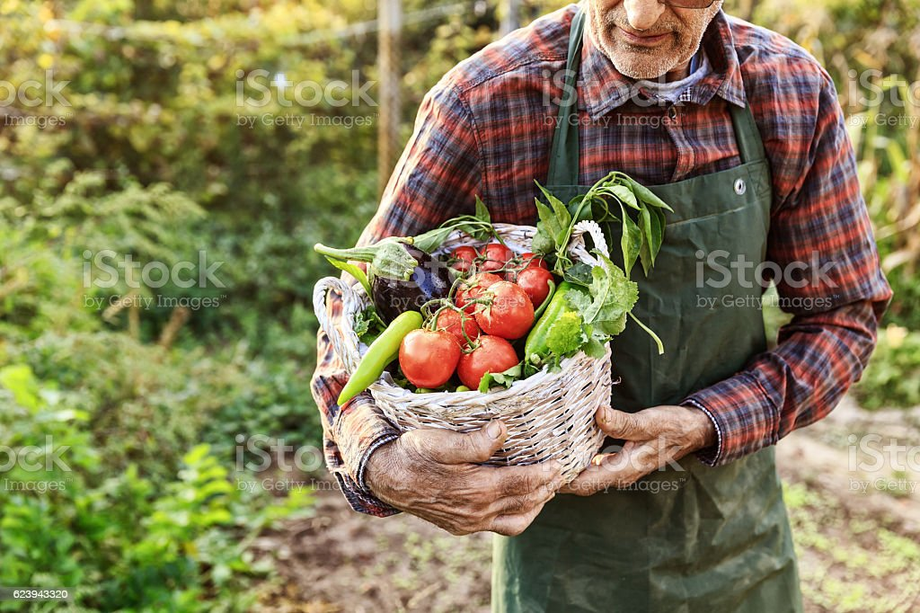 Unrecognizable farmer carrying basket with vegetables stock photo