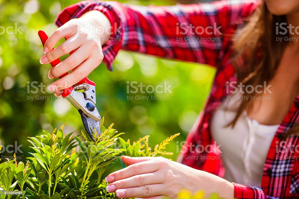 Unrecognizable gardener pruning little tree, green sunny nature stock photo
