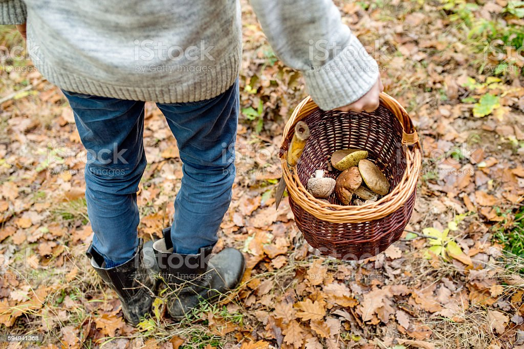 Unrecognizable man holding basket with mushooms, autumn forest stock photo