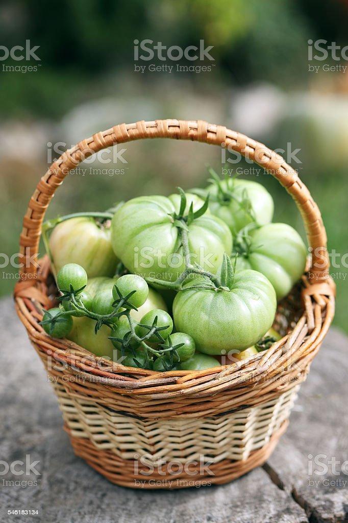 unripe, green tomatoes stock photo