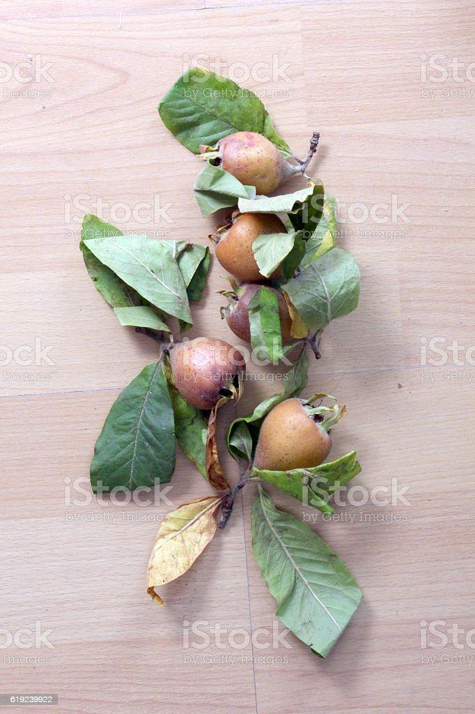 unripe medlar with leaf on white background stock photo
