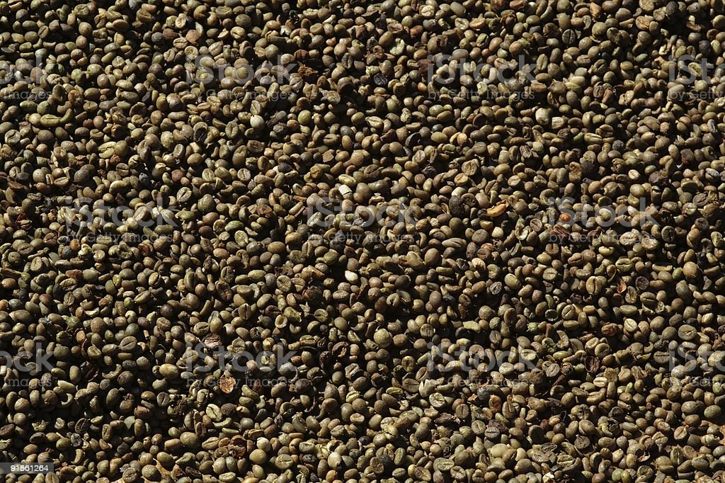 Unroasted Coffee beans royalty-free stock photo