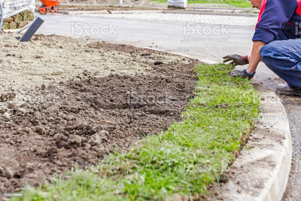 Unrolling grass, applying turf rolls for a new lawn stock photo