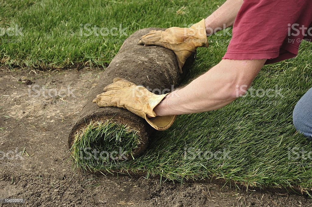 Unrolling Sod stock photo