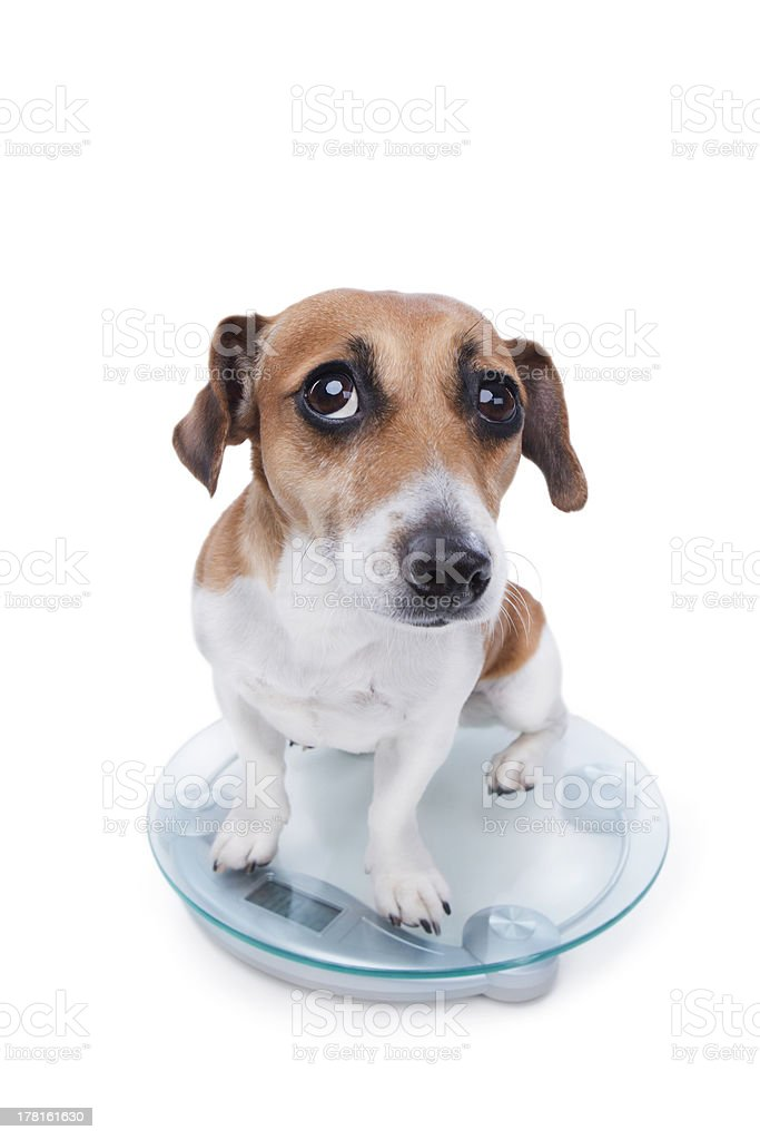 unsuccessful pet diet royalty-free stock photo