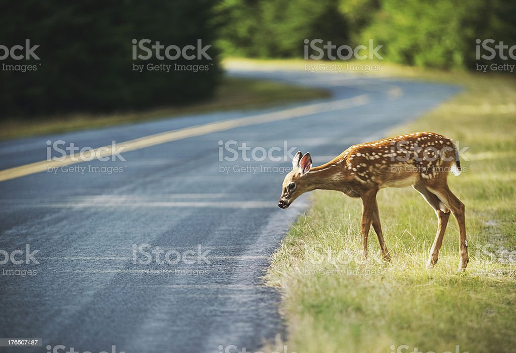 Unsure of the Road stock photo