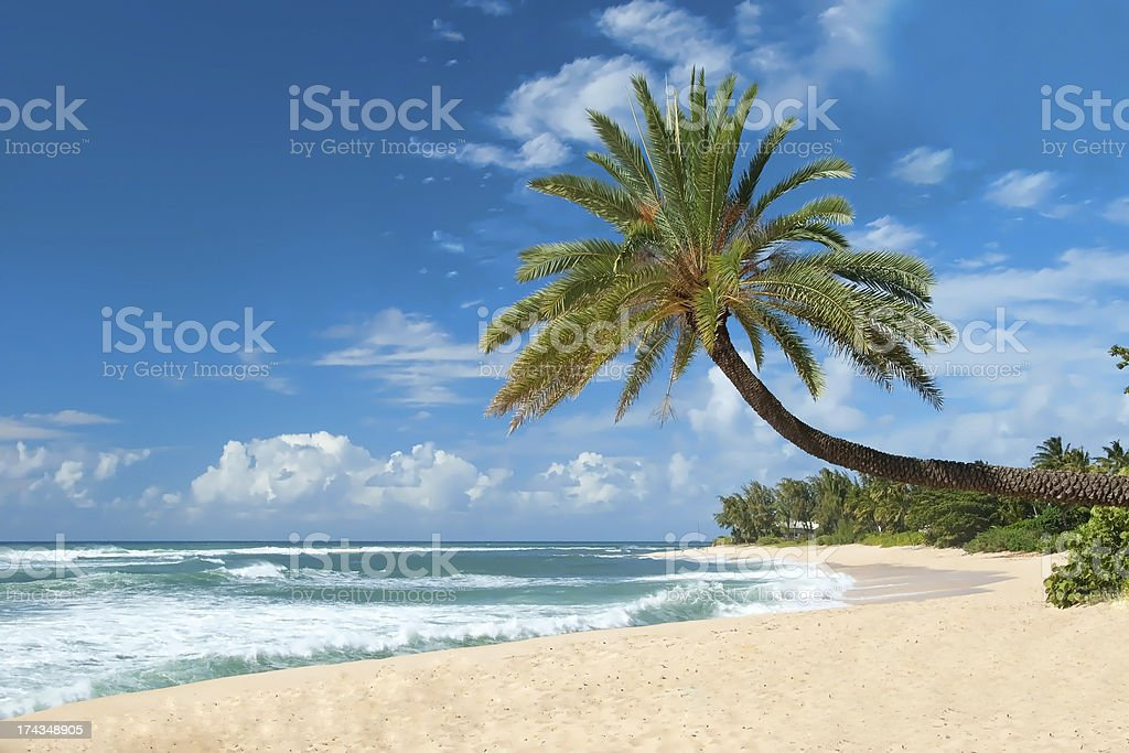 untouched sandy beach with palms trees and azure ocean royalty-free stock photo