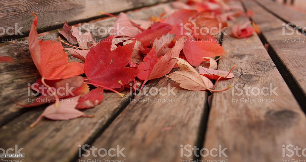 Unused Park Bench royalty-free stock photo