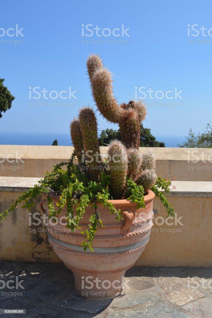Unusual cactus in the Preveli monastery. Crete, Greece. stock photo