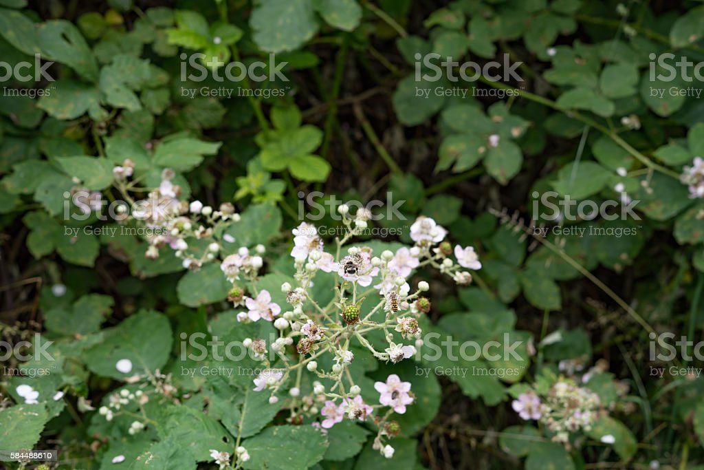 Unusual fantastic small berries stock photo