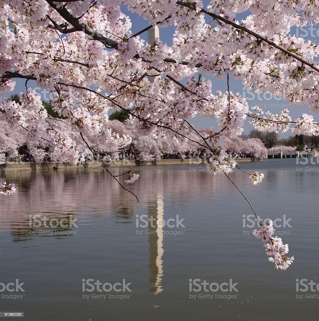 Unusual reflection of Washington Monument stock photo