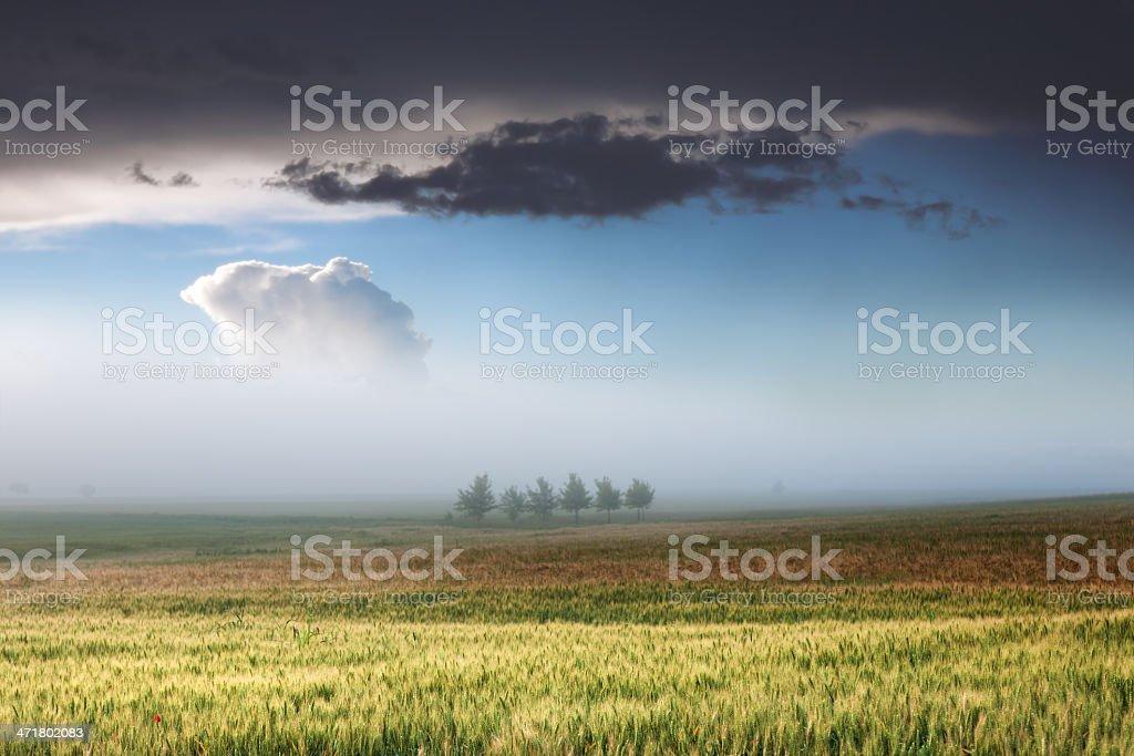 Unusual scene in foggy dawn royalty-free stock photo