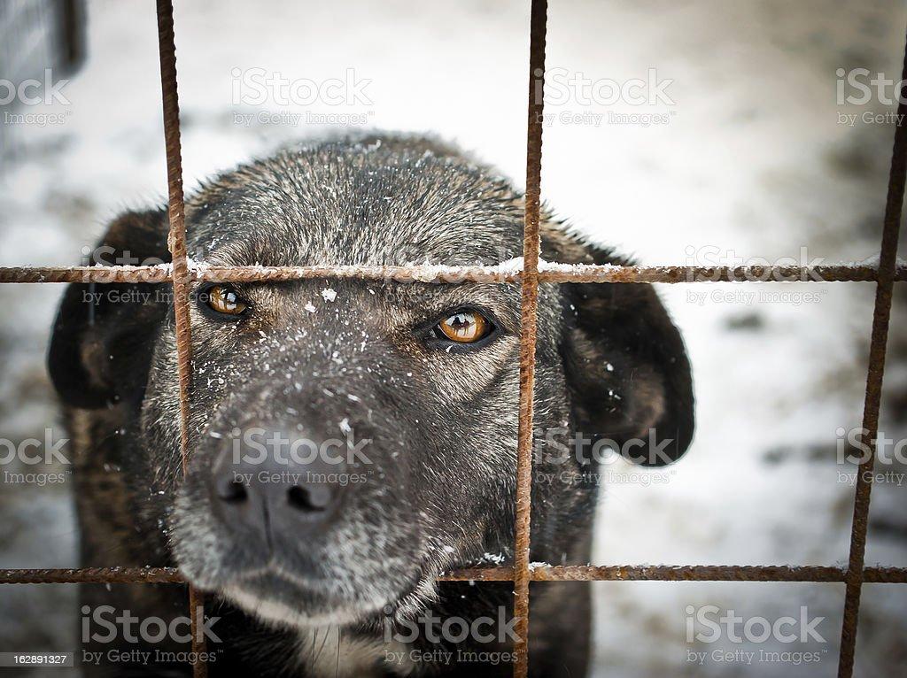 Unwanted dog stock photo