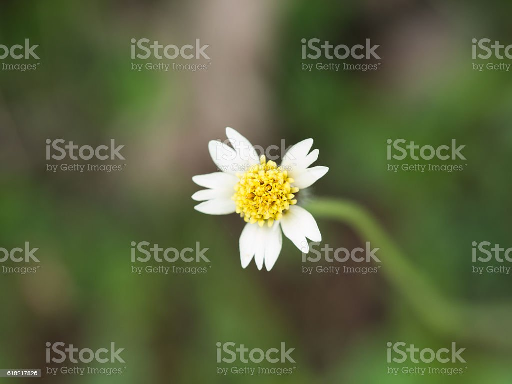 Unwanted Flora Flowers Blooming stock photo