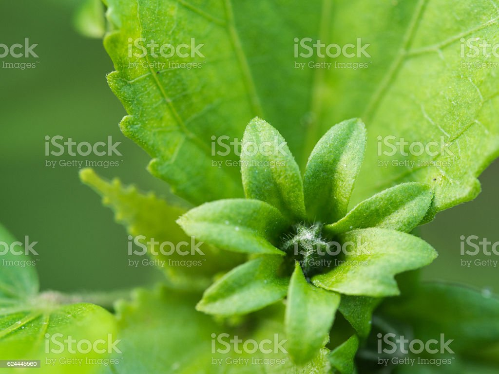 Unwanted Flower Blooming stock photo