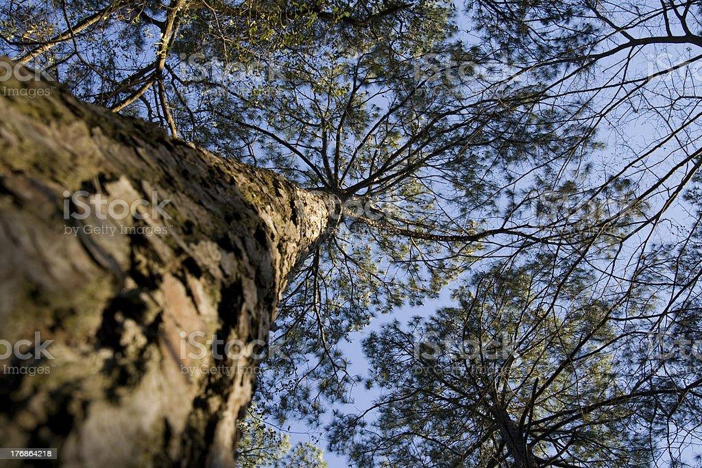 Up a Tree stock photo