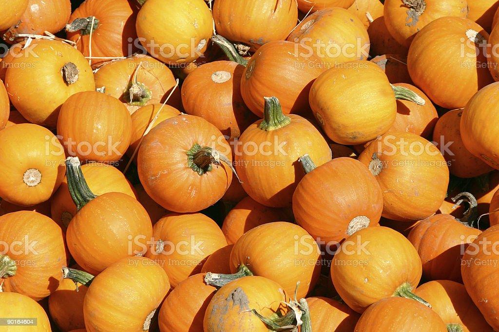 Up Close - Mini Pumpkins stock photo