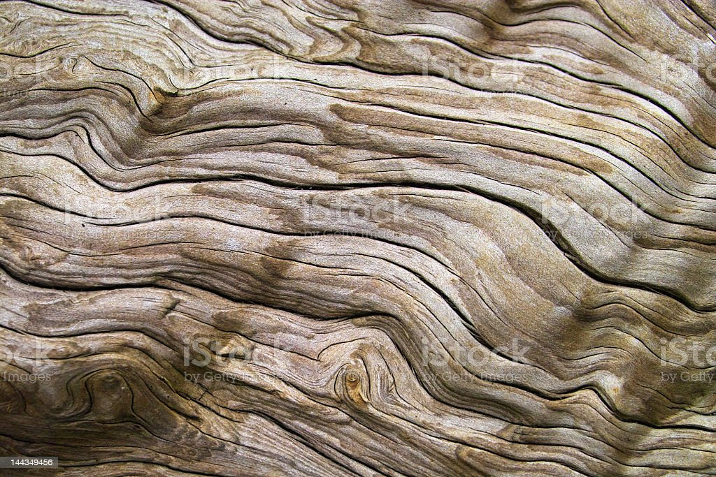 Up close view of a piece of driftwood stock photo