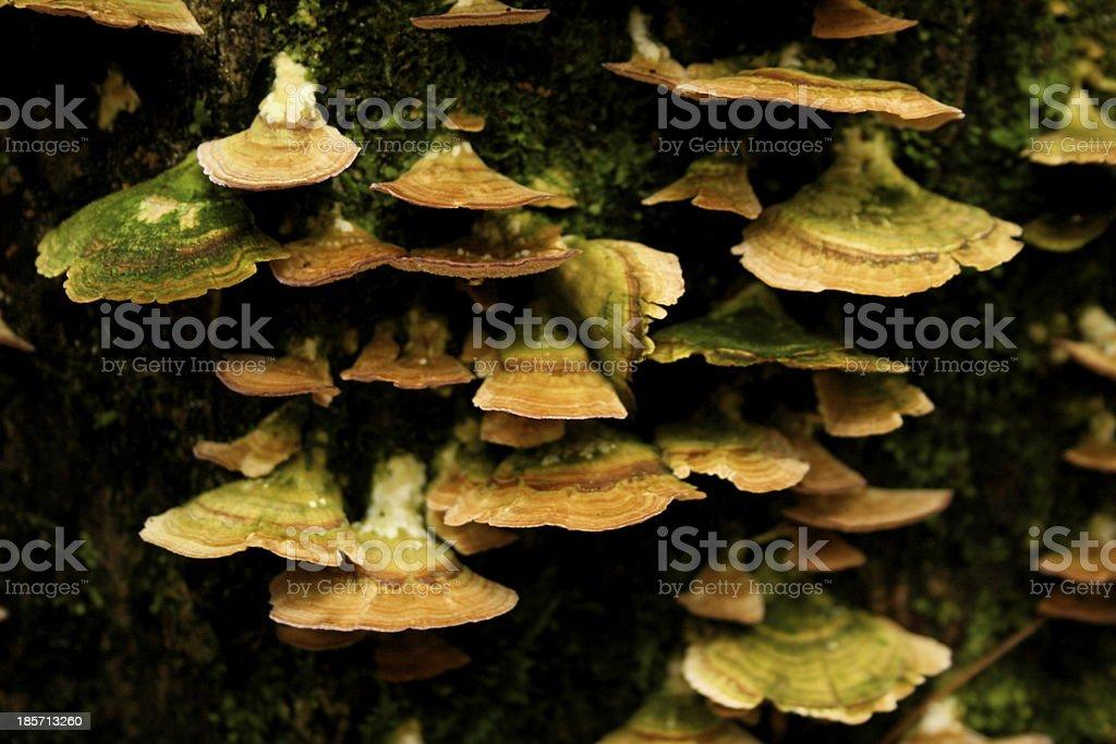 Up Close View of Shelf Mushrooms royalty-free stock photo