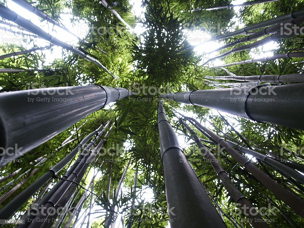 Up the bamboo royalty-free stock photo
