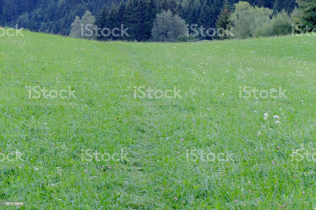 Up the meadow stock photo
