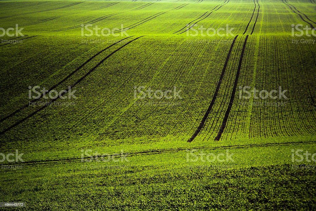 Uplands green agriculture fields composition. stock photo