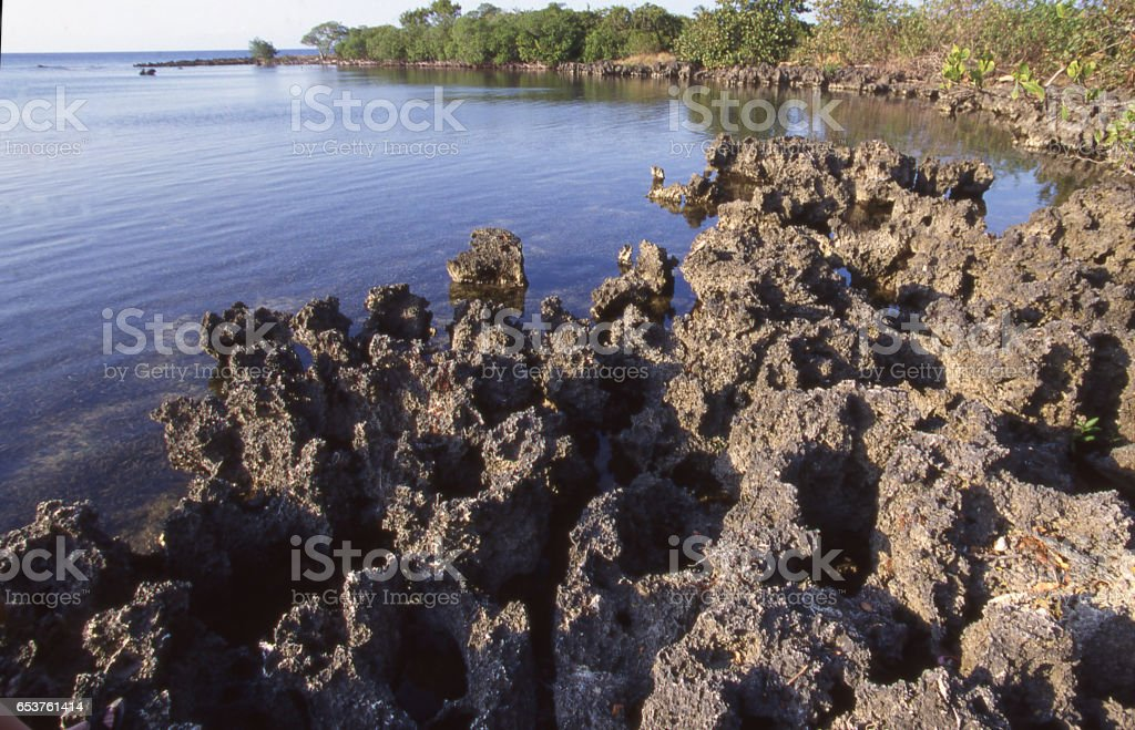 Uplifted ancient ironstone or corral reefs along rocky shore near West End Bay Islands Honduras stock photo
