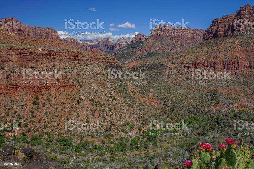 Upper Kolob Plateau Zion National Park in Utah stock photo