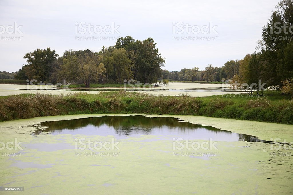 Upper Mississippi River Floodplain at Goose Island, WI royalty-free stock photo