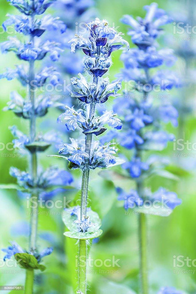 upright bugle stock photo