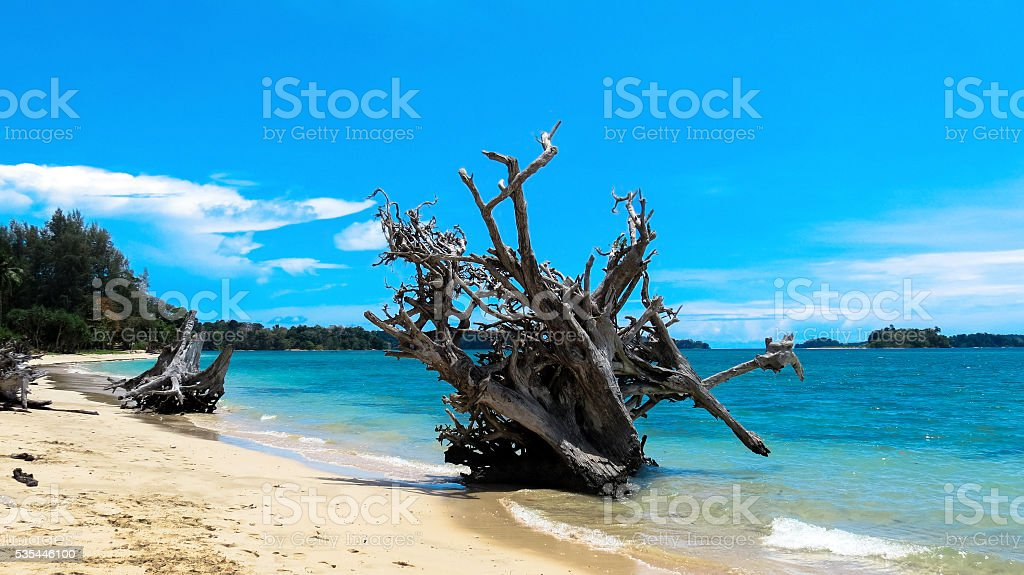Uprooted tree on a beach stock photo