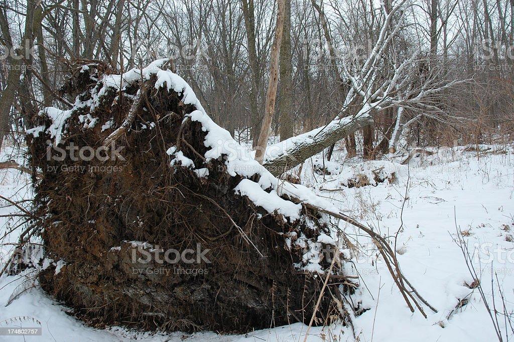 Вырванный с корнем дерево Стоковые фото Стоковая фотография