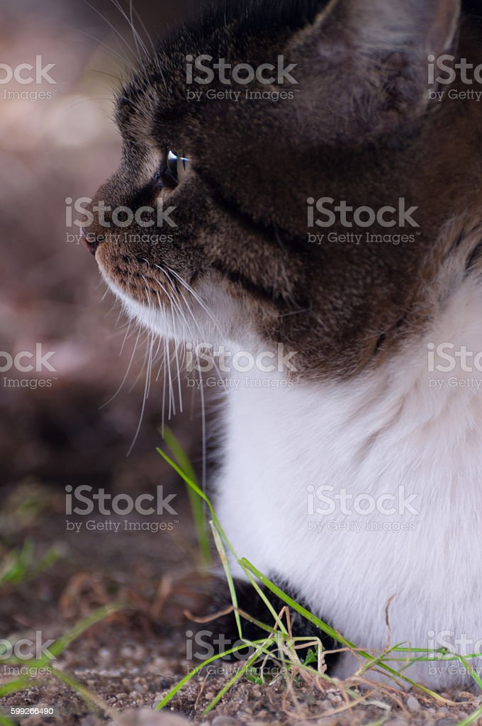 upset cat looking to the left side - vertical view royalty-free stock photo