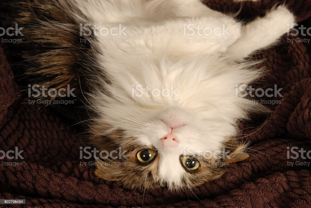 Upside Down Cat stock photo