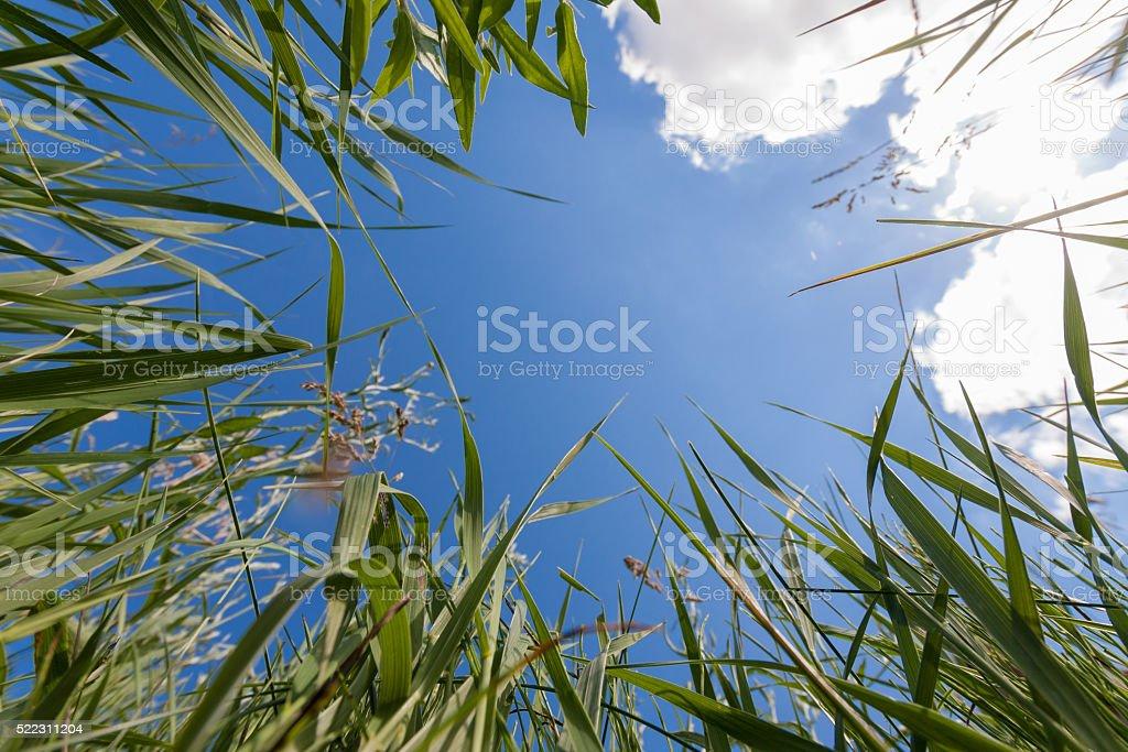 Upside view to sky through greem grass stock photo