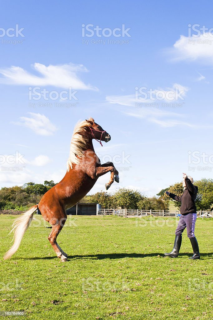 Up-young woman schools her horse to rear on command stock photo