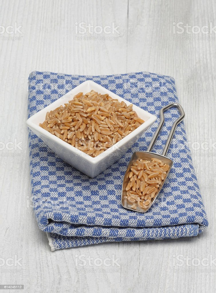 Ur cereal Kamut, Khorasan wheat, Triticum turgidum x polonicum stock photo