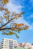Urban autumn leaves