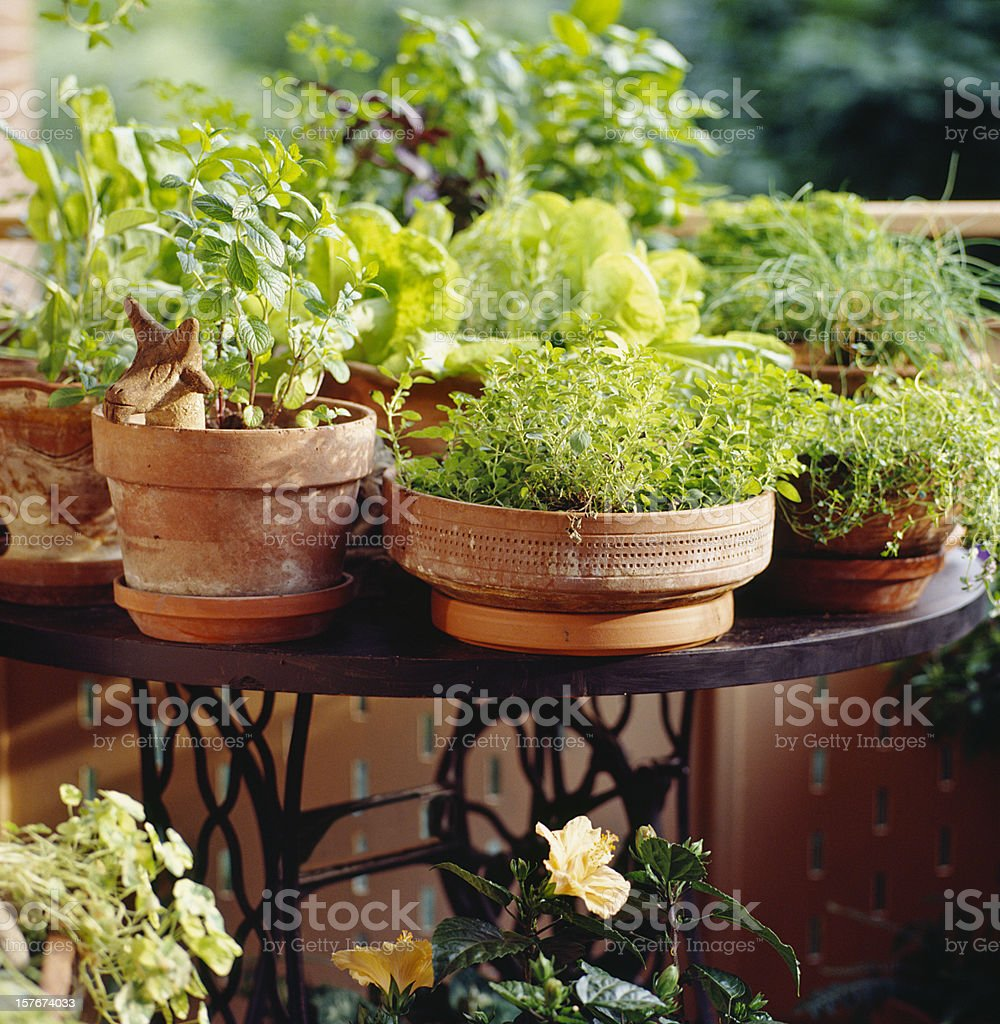 Urban balcony decorated as country oasis stock photo