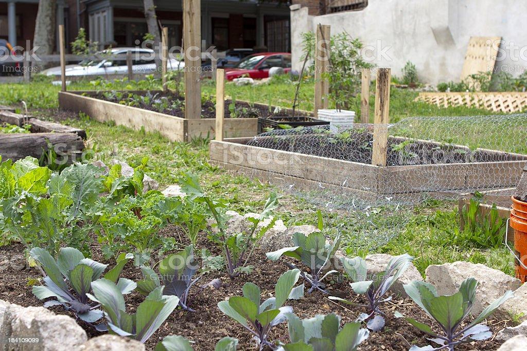 Urban community garden royalty-free stock photo