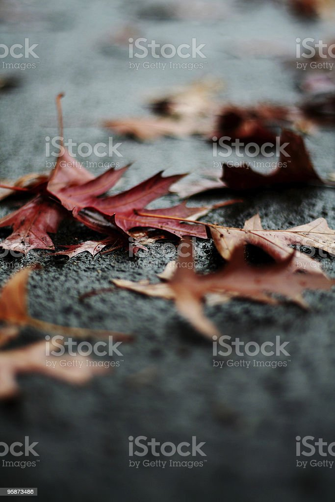 urban fall royalty-free stock photo
