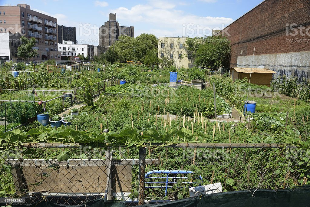 Urban farm plot in Coney Island, New York stock photo