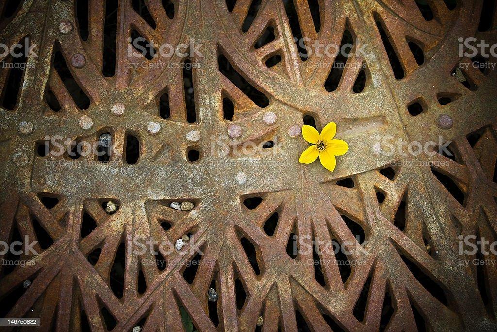Urban Flower royalty-free stock photo