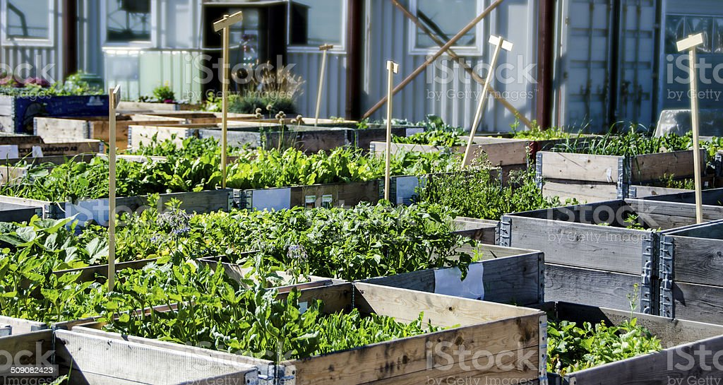 Urban Garden and Farming stock photo
