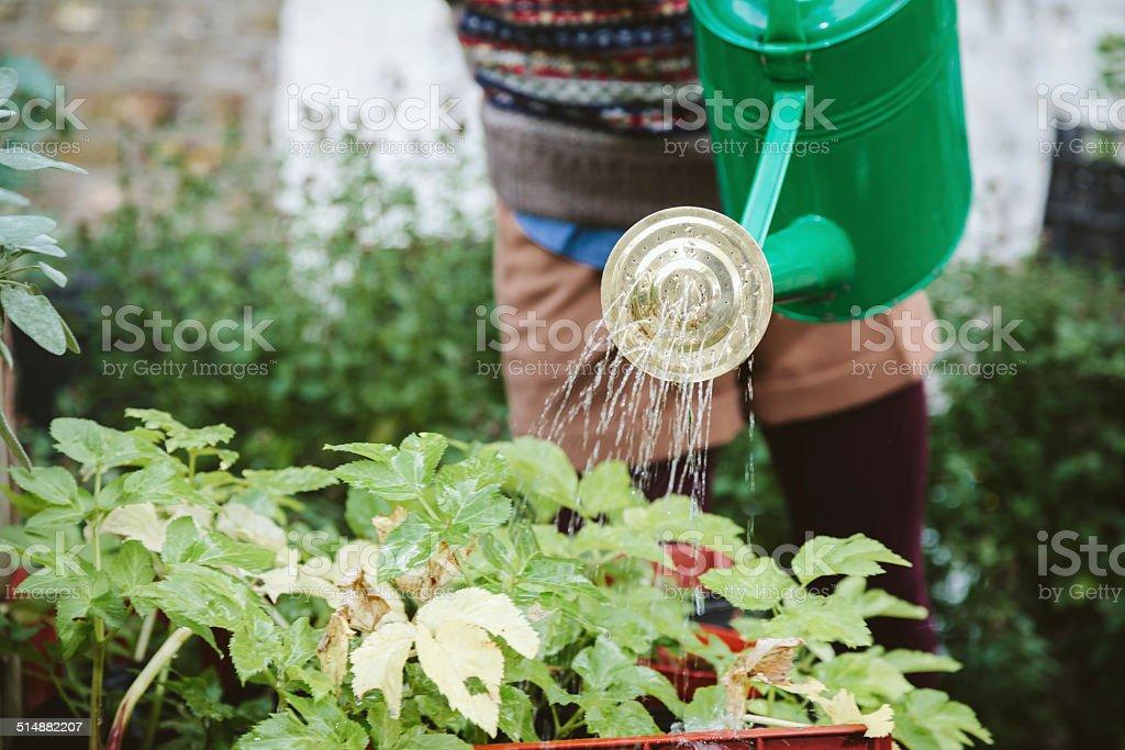 Urban garden. Girl watering plants stock photo