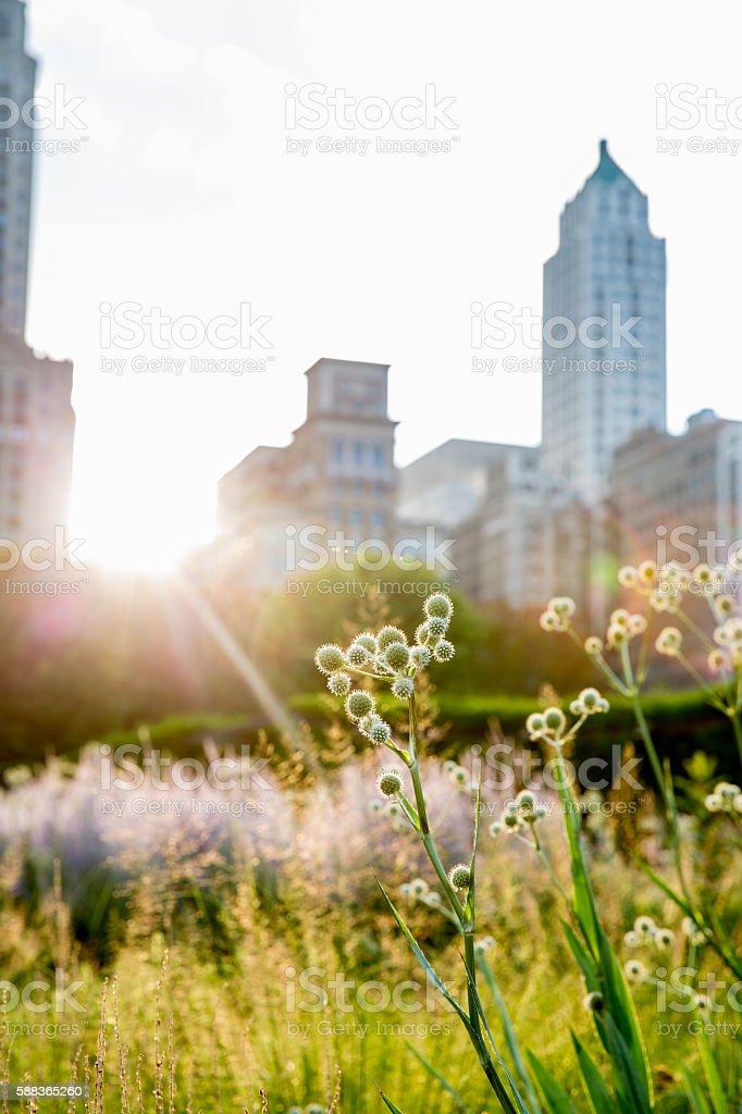 Urban Garden in Chicago stock photo