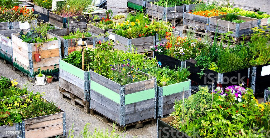 Urban Gardening and Farming in summertime stock photo