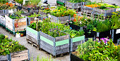 Urban Gardening and Farming in summertime